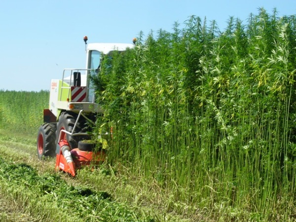 industrial-hemp-harvesting-using-kemper-4500-cutter-(source-ecofibre-industries)